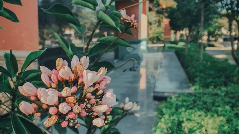 Cebu Flowers and Greeneries
