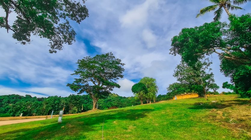 Trees and Greeneries Naturescape