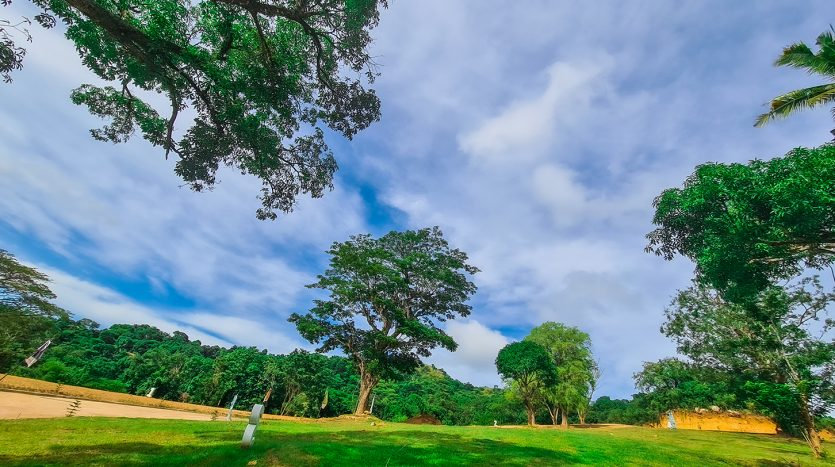 Trees and Sky view