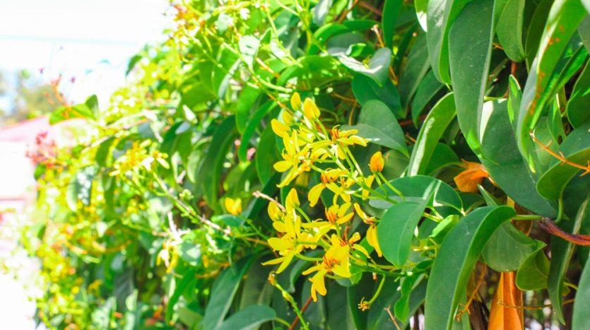 Iloilo Flowers
