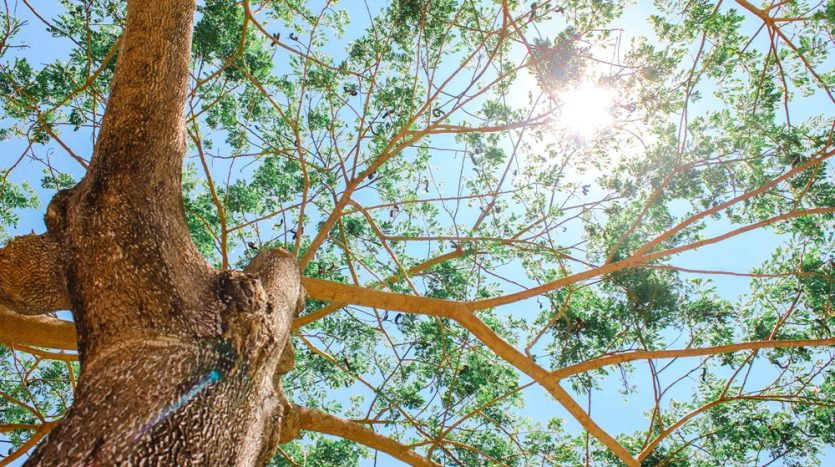 Iloilo Tree and Sky View