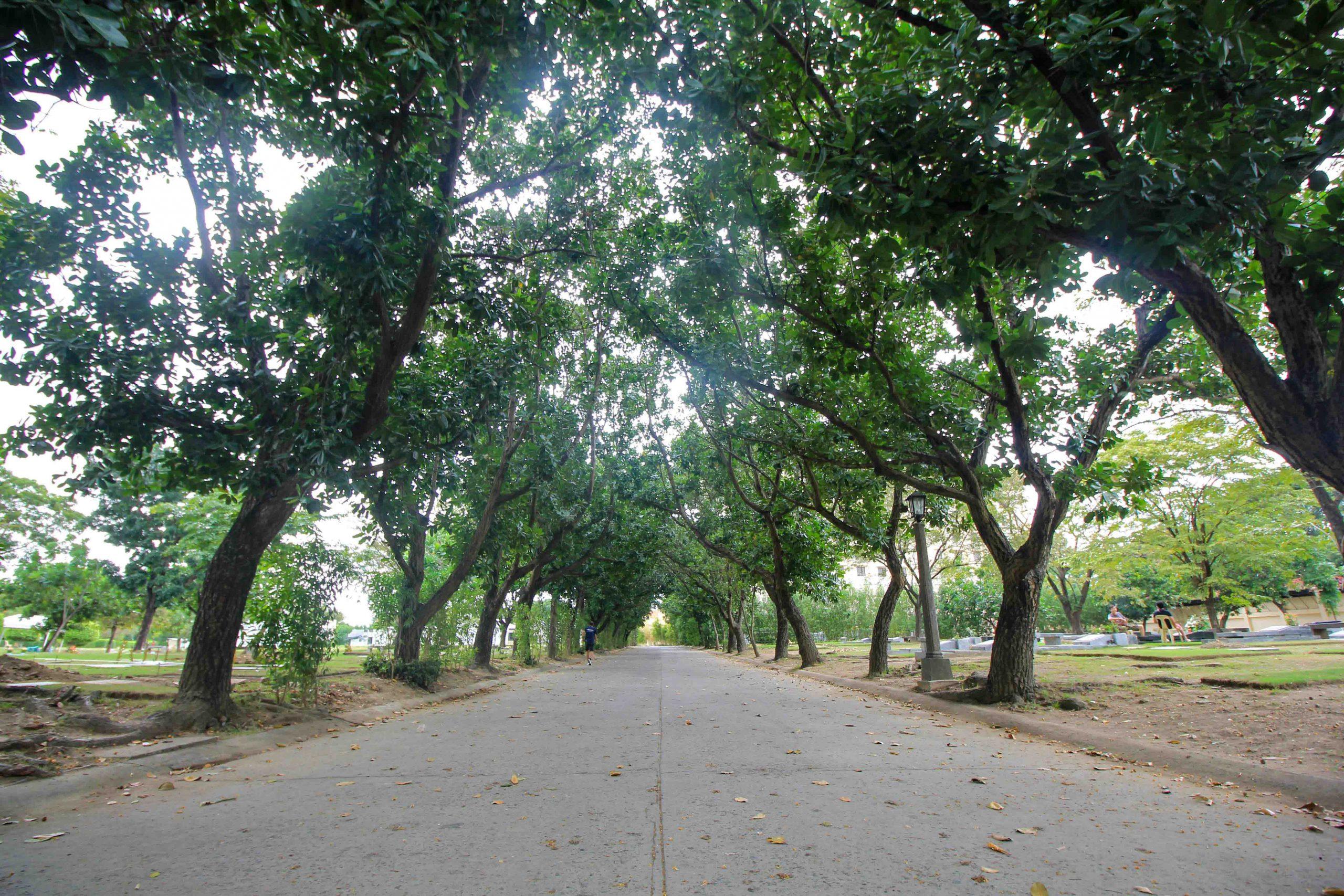 Las Pinas Promenade Trees