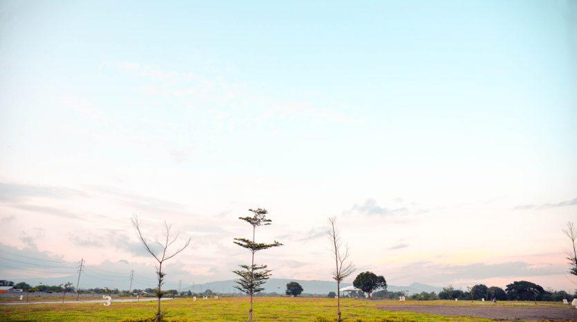 GenSan Golden Haven Landscape