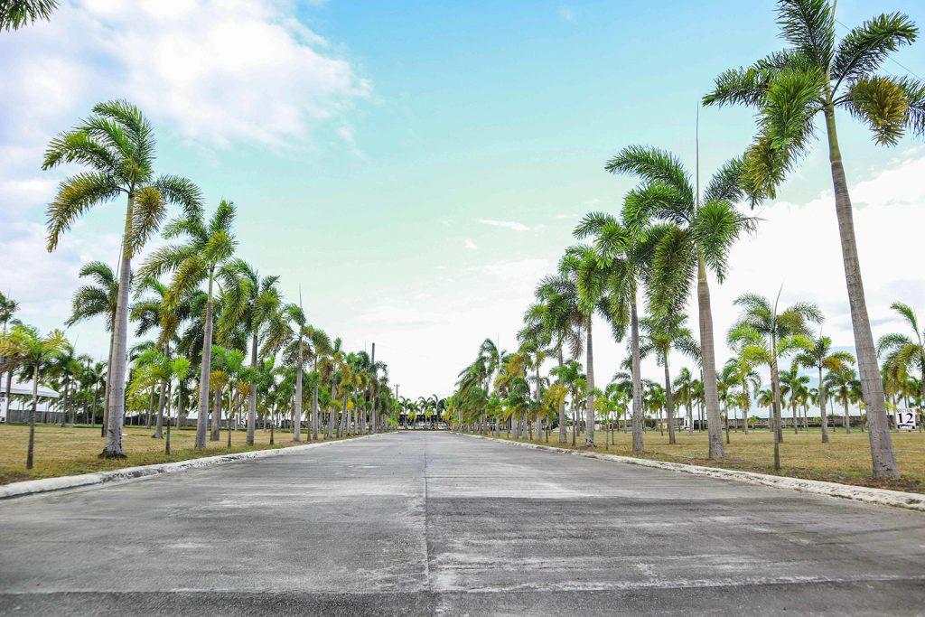 Palm Trees laning inside St Uriel Memorial Park