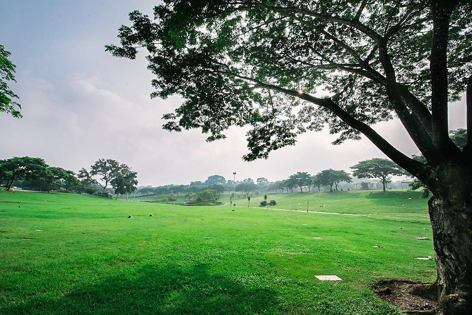 Park field and tree shade