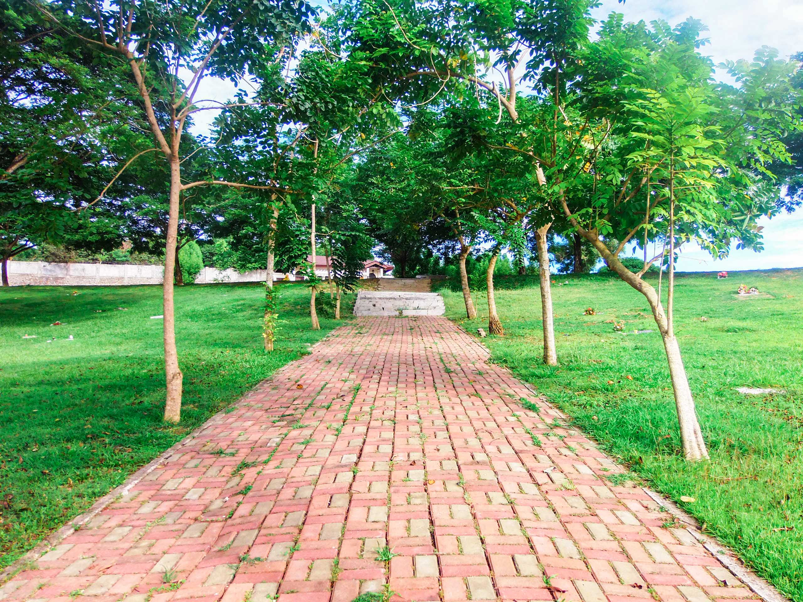 Pathway and Trees