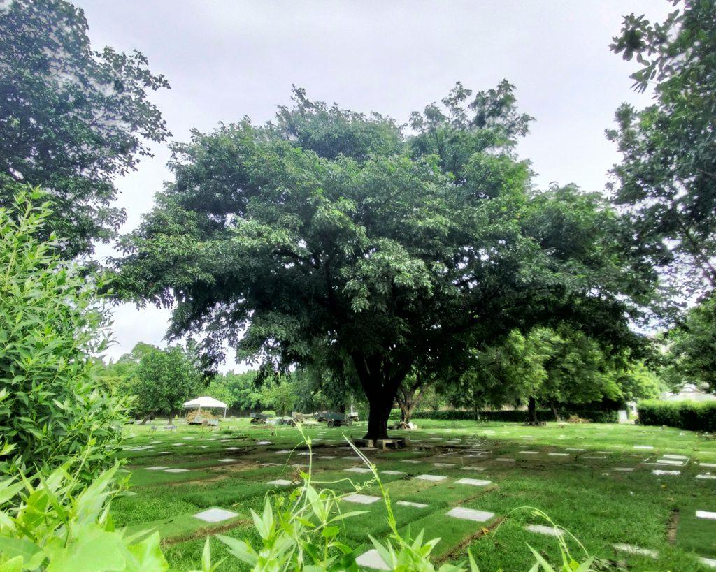 Tree memorial park golden haven las pinas 4